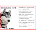 Plaque 24 cm CDT, 8 Souhaits Secrets, Husky Gris Tête