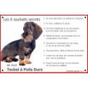 """Teckel à Poils Durs Assis, plaque """"8 Souhaits Secrets"""" 24 cm CDT"""