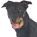 BH4 Beauceron T.png