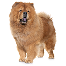 C88 Chow-Chow E.png